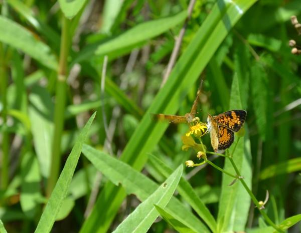 Papilloner sur une Fleur