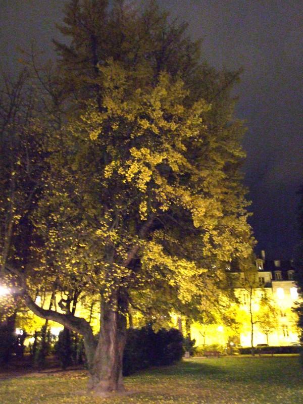 La nuit d'automne